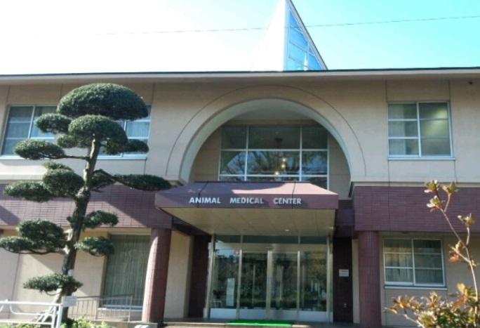 日本大学動物病院